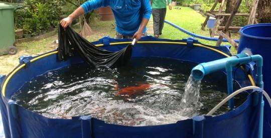 บริการเช่าบ่อผ้าใบสำหรับพักปลา