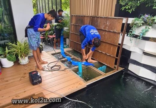 วิธีล้างบ่อกรอง ฉบับ Koi2u ครับ